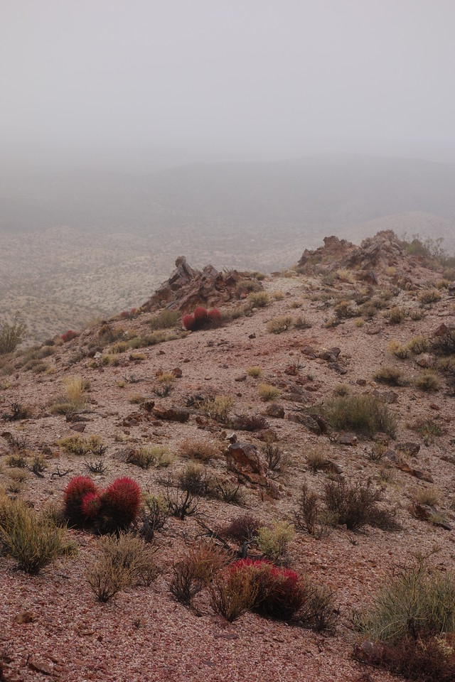 Ont the way to Tepoc Mine... the barrel cactus were brilliant