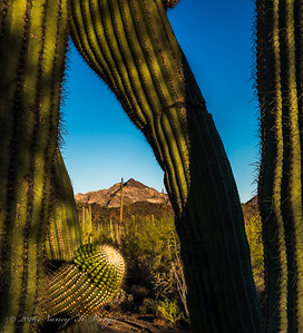 Through a Saguaro (HDR) - Organ Pipe National Monument, Arizona - Nancy Varga - March 2016
