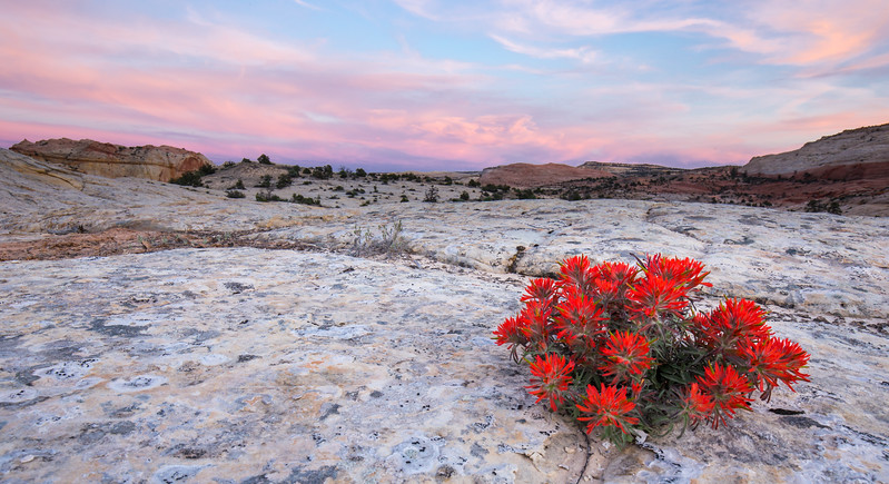 Beauty Grows in the Desert