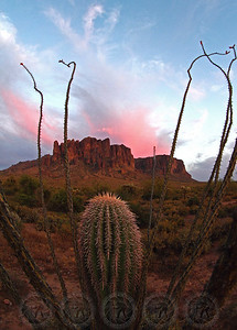 Lone Barrel Cacti, Superstition Mtns, Az
