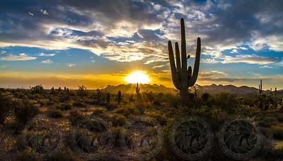 Saguaro at Sunset, Superstition Mtns, Az