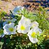 Primrose Bouquet