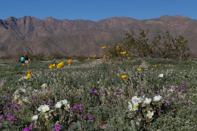 Flowers and Range