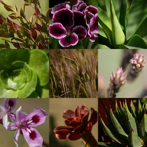 LCP-Blooms-T1lOyvxd
