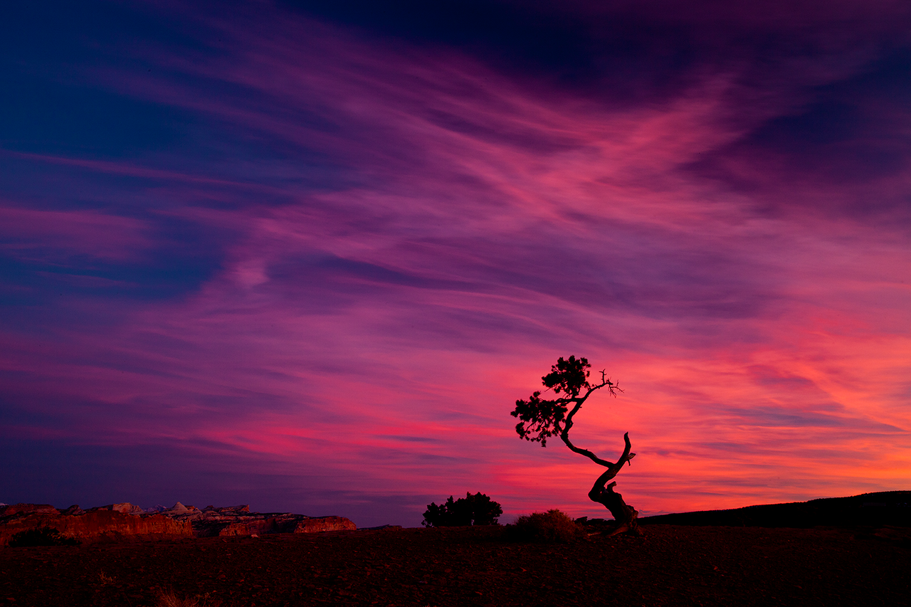 Sunset Tree, Capitol Reef National Park