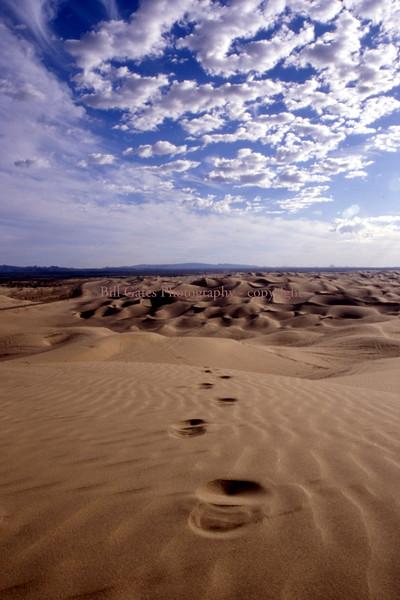 Desert Light Images