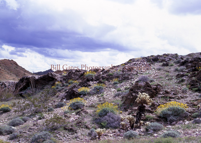 Springtime Flowers - Chocolate Mountains in Imperial Valley, Ca