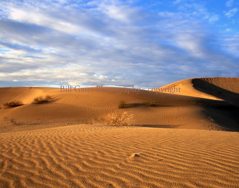 """Desert Gold"" - Algodones Sand Dunes, Imperial County, California"