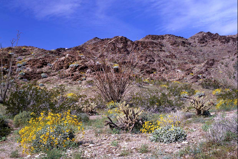 Desert Springtime - Chocolate Mountains in Imperial County, California