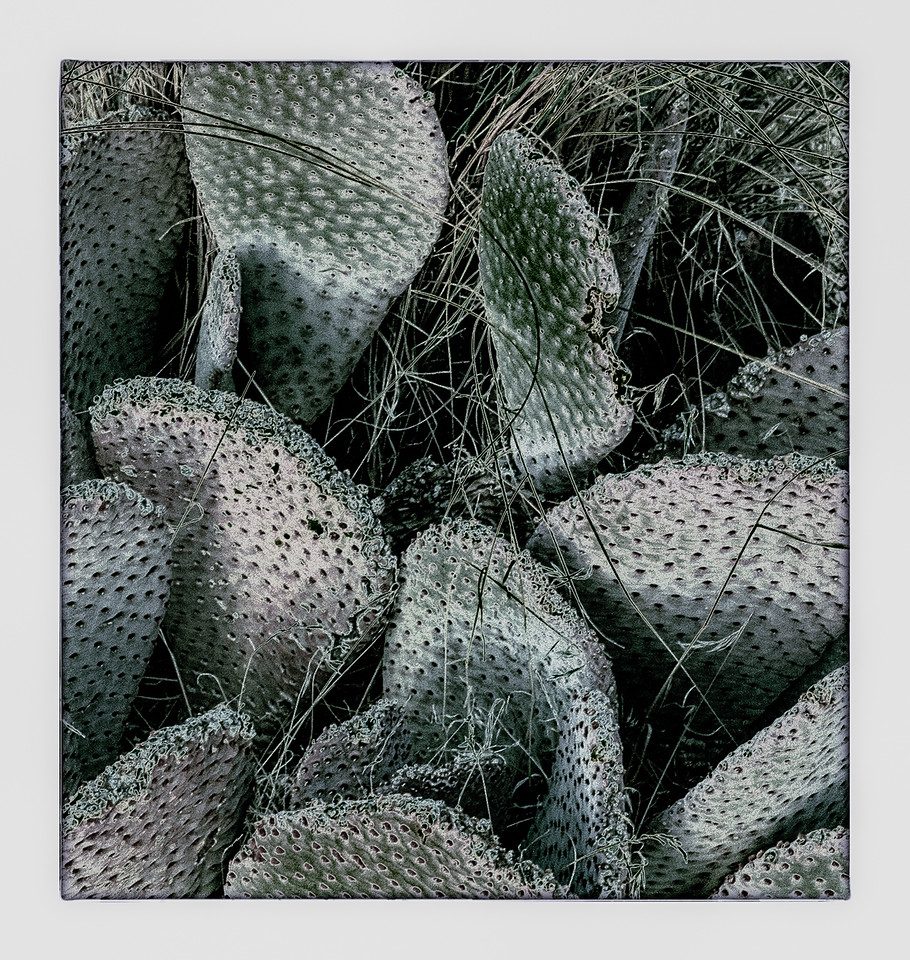 Paddle cactus.