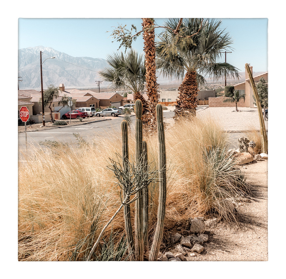 There are cactus plants, decorative grasses and Palm trees around the edge.