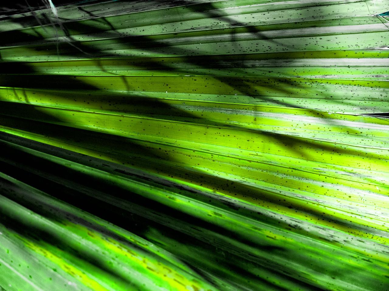 Shadows on a Palm leaf.