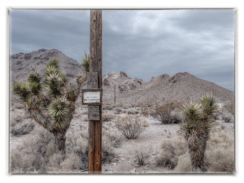 We are thrilled to see a few Joshua trees.