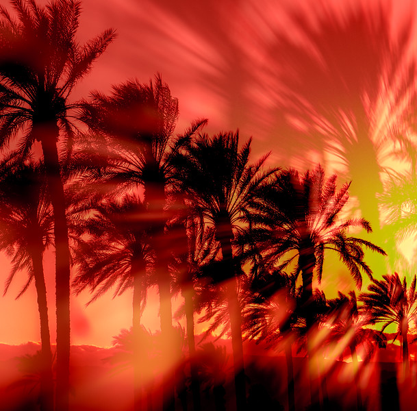 Palm trees sillouette against the darkening sky.