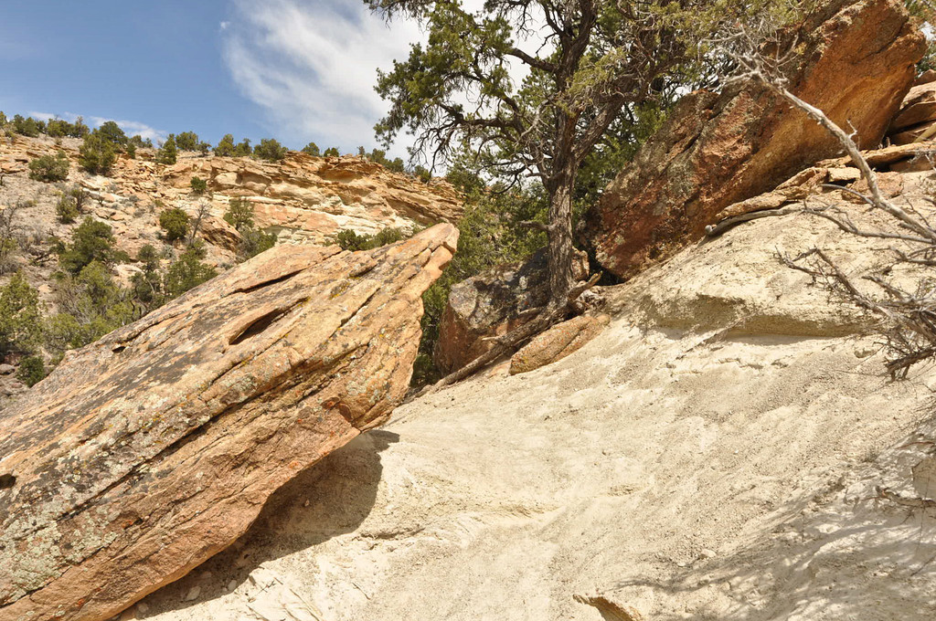 Petrified Forest, Escalante, Utah (Highway 12 East)