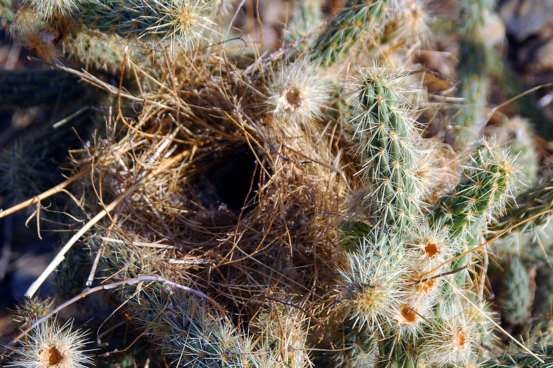 Close up of the nest.
