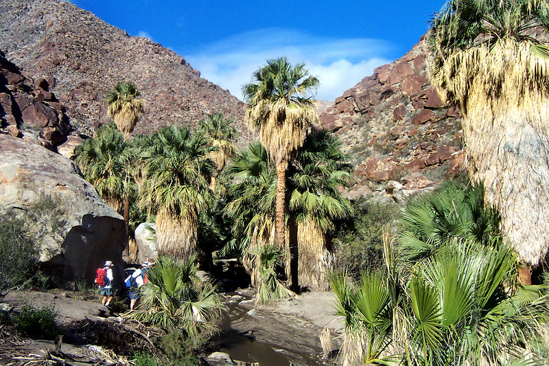 We came across this group of palms a short ways past the waterfall.