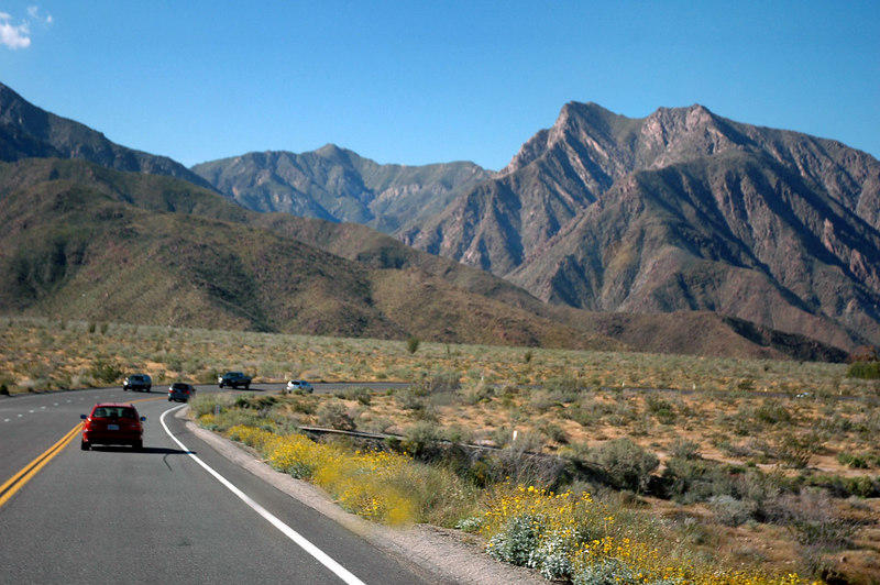 Lot of flowers along Hwy S22. Almost to the Borrego Palm Canyon campground that lies at the base of Indian Head Peak on the right. I'll be meeting a group of friends there.