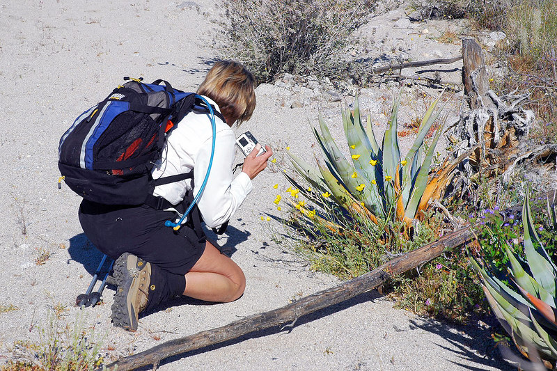 Sooz getting a shot of some wildflowers. It took us over half an hour to get going on the hike due to all the flowers we were taking pics of.
