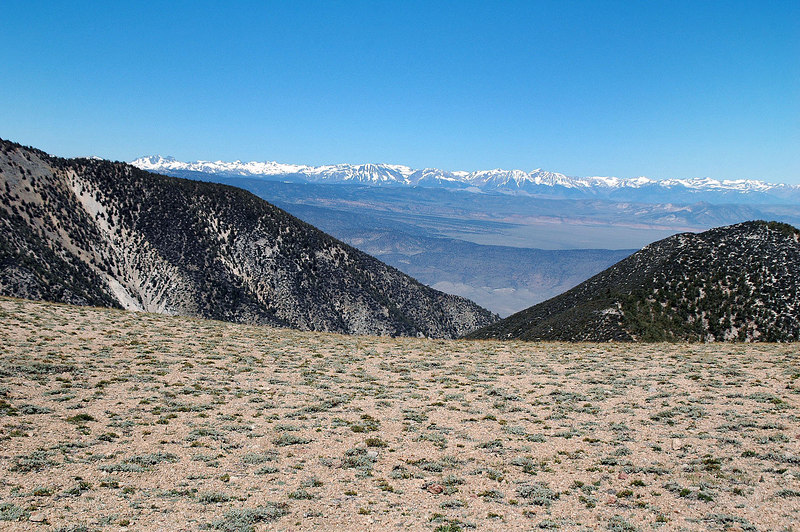 View of the snow covered Sierra to the west from the saddle.