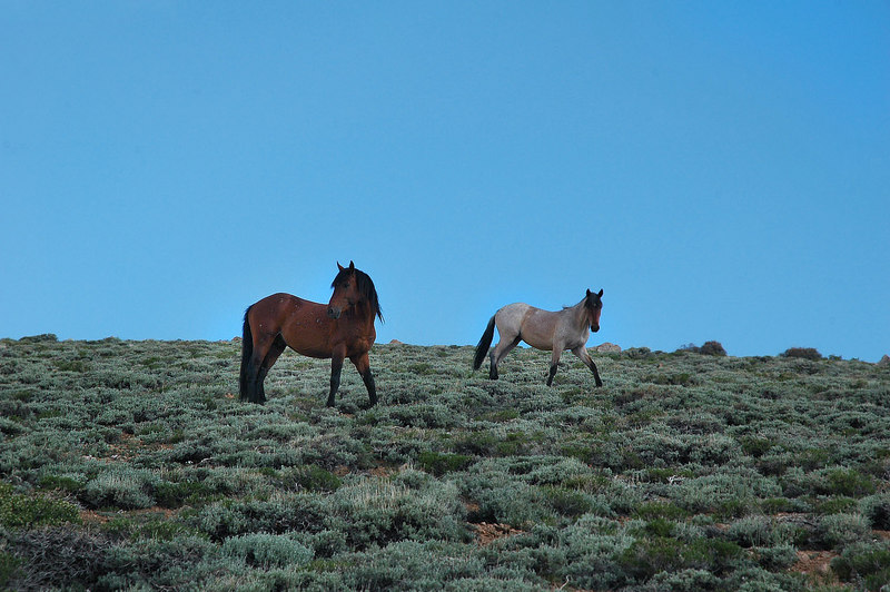 I heard that wild horses roamed the area, was glad we came arcross these.