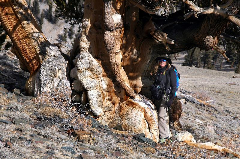 Sooz at the base of the same tree.