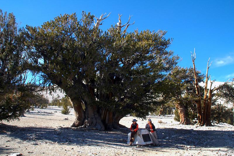 Cori and Sooz with the Patriarch tree.