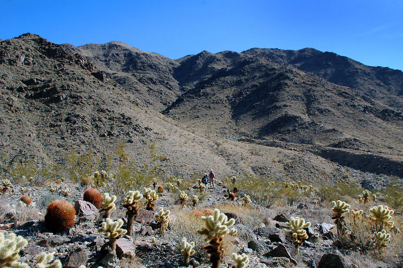 The hike started in a patch of barrel and cholla cactus.