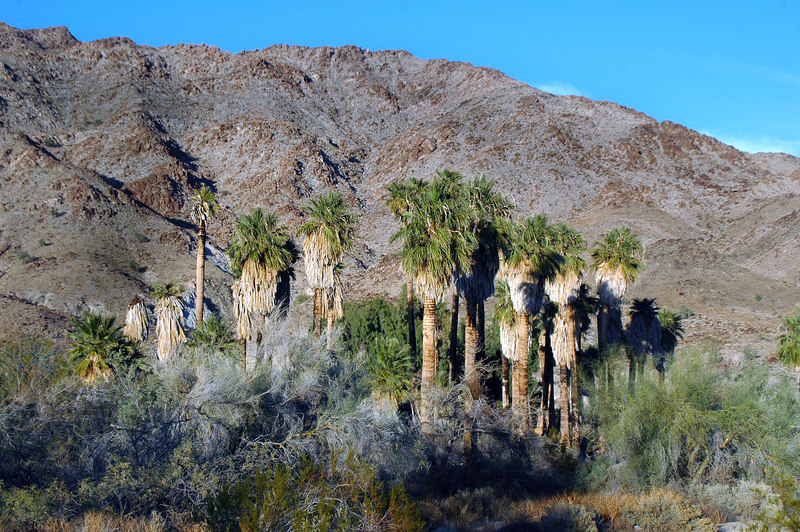 Group of palms at the campground.