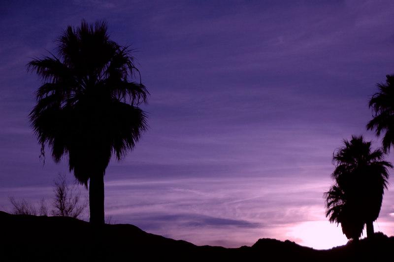 Palms at sunset.