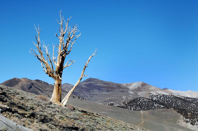 Nice looking tree on the ridge.