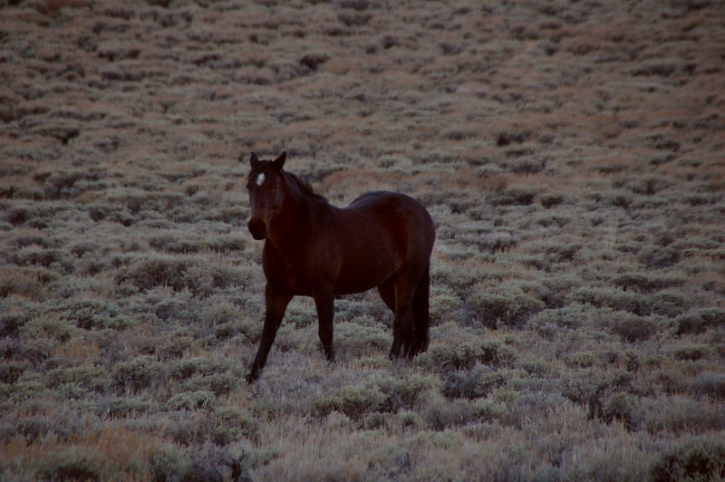 Came upon this wild horse in a meadow, looks like the same one I saw last year in Campito Meadow.
