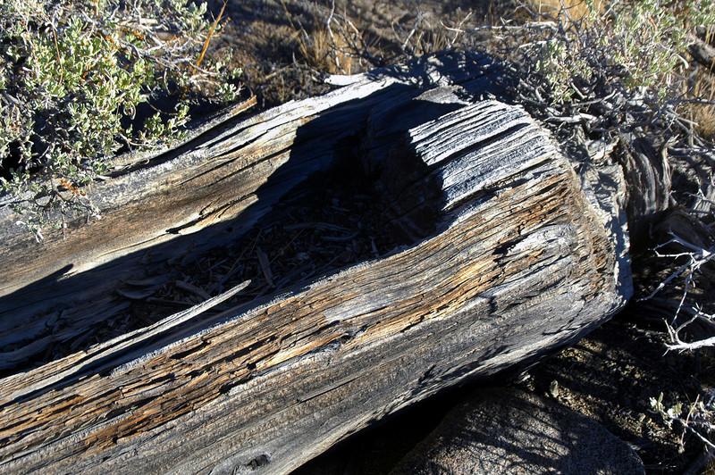 Close up of the log.