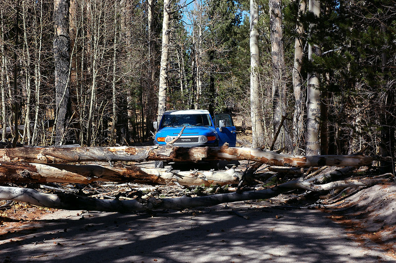 While driving to the trailhead for Glass Mountain Ridge  in the Benton Range, we were stopped by these dead trees that had fallen across the road. Photo by Sooz.
