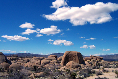 Joshua Tree - Eagle Mountain 2/28/04