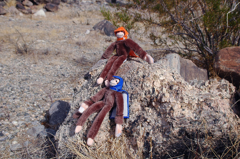 We stopped the the start of the ridge so the monkeys could take a break.