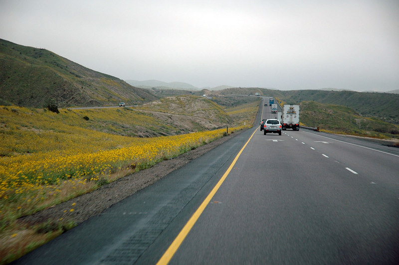 The flower lined 10 Freeway near Joshua Tree. It's overcast, but the rains have stopped.