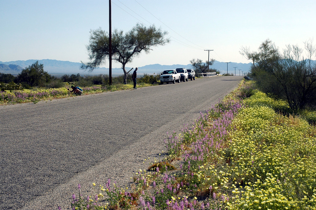 Before heading home, we drove out to Desert Center to check out the flowers in the area.