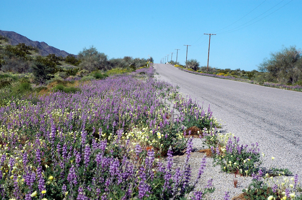 We were finding a lot of flowers along the road side.