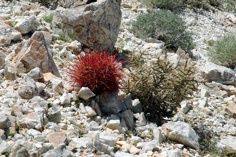 A little barrel cactus and pencil cholla.
