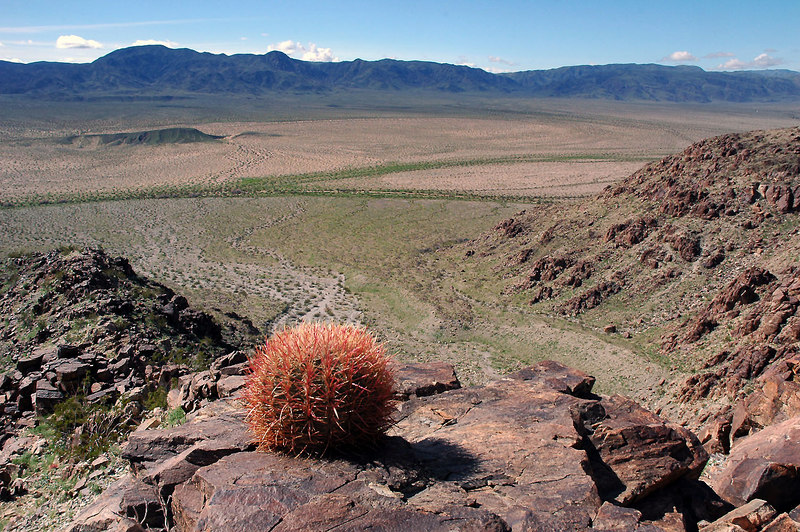 This cactus has a nice view of the valley.