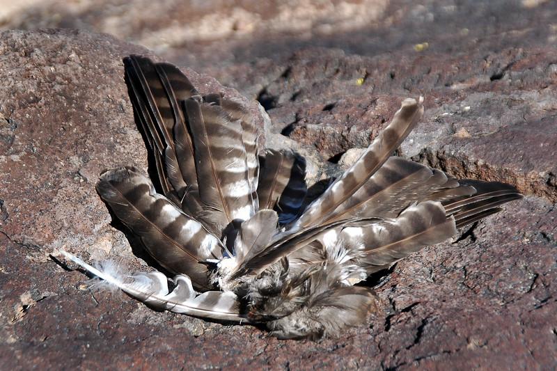 Tom found a hawk wing near the peak.