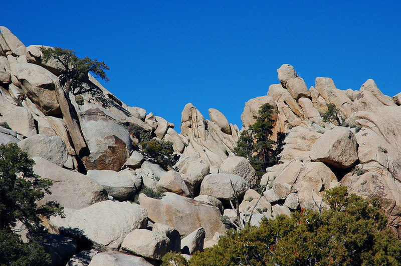 Nice looking rocks and trees. This section reminded me of Joshua Tree.