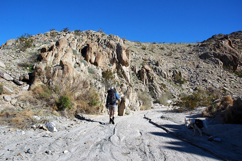 After going down the wash for about a 100 yards, we turned up this canyon.