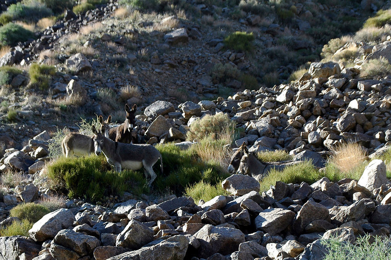 More burros along side the road.