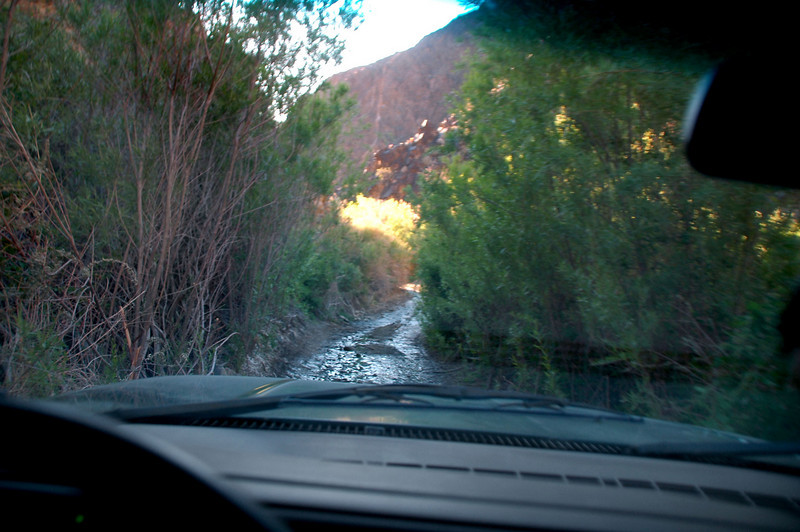 Some sections of the lower canyon were wet and overgrown.