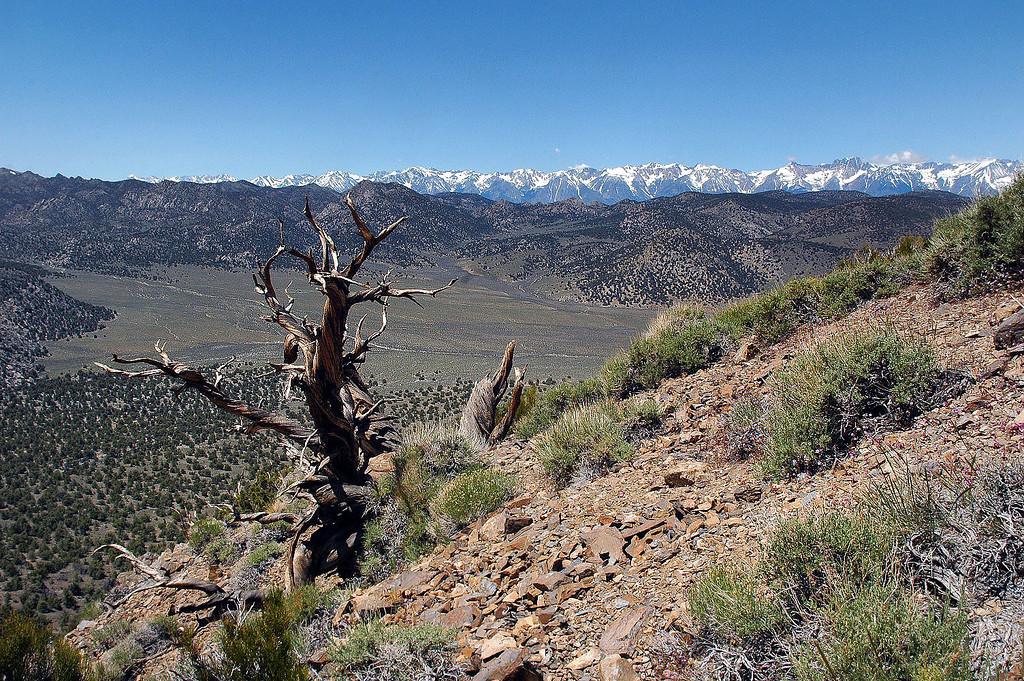 Looking across a section of Squaw Flat to the Sierra Mountains to the west.