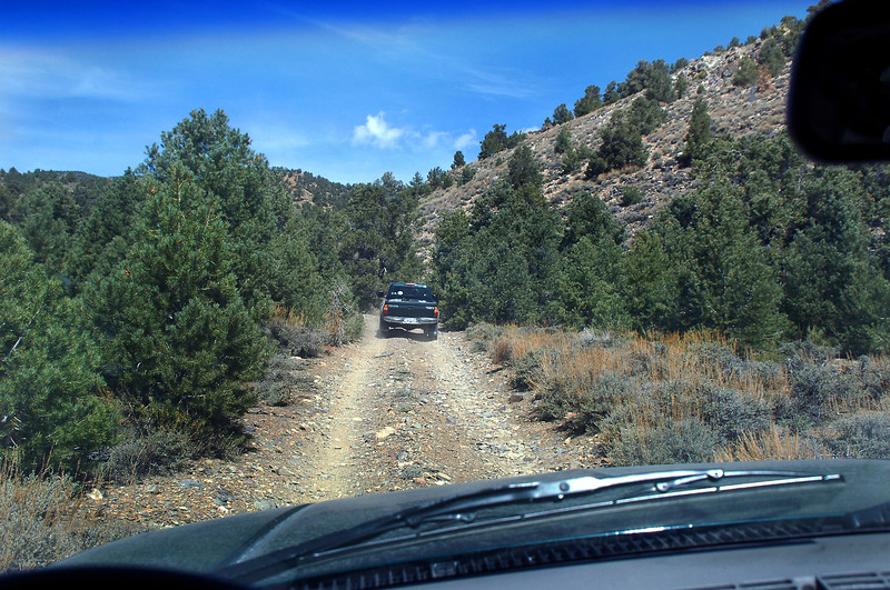 Starting into the trees at about 8,500 feet. The road was overgrown in places. One of the side mirrors got folded back from hitting branches.