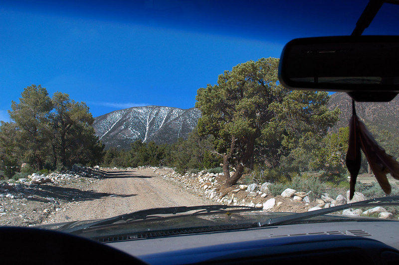 We drove into a pinyon forest as we neared Waucoba Mt. Soon we will come upon the short rough road that will take us a little closer to the base of the mountain.