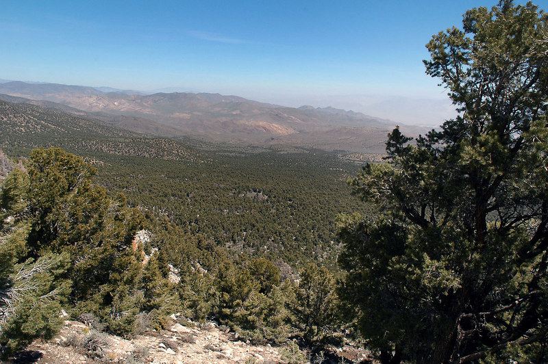 Looking back on the pinyon forest as we gain some altitude.